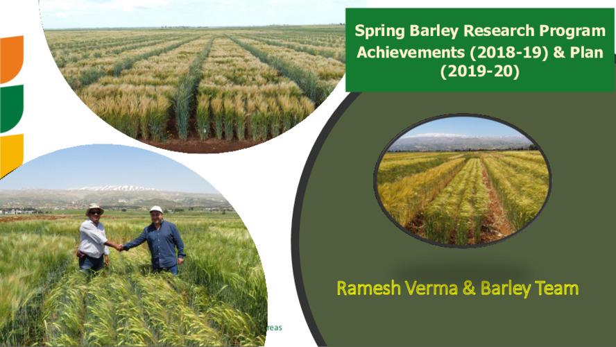 Spring Barley Research Program Achievements (2018-19) & Plan (2019-20)
