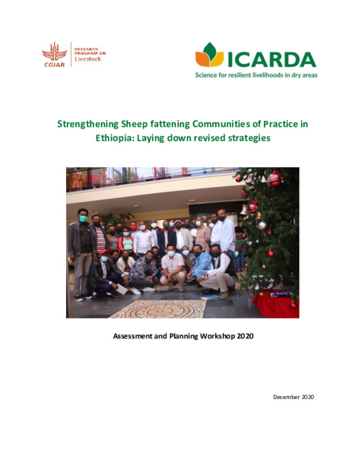 Strengthening Sheep fattening Communities of Practice in Ethiopia: Laying down revised strategies